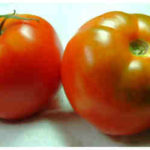 Tomato Red Bush – Who Are You?